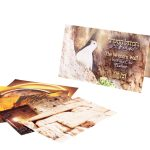 Postcards from the Western Wall
